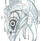 Music sardine skull by Goran Medjugorac