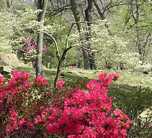 Red Azaleas and Dogwood by bannercgtl10