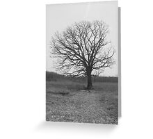 Under the Old Tree Greeting Card