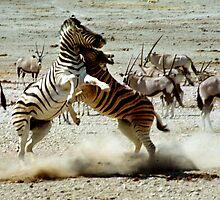 Zebra Fight by Carole-Anne