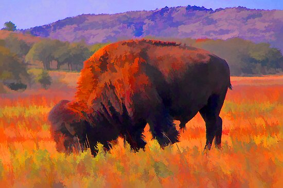 American bison by JohnDSmith