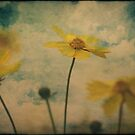 Flowers In Beauty. by mikepemberton