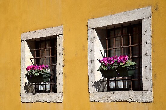 Windows by Martina Fagan