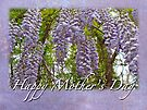 Mother's Day Card - Purple Wisteria by MotherNature