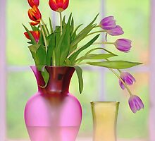 window and tulips.. by JOSEPHMAZZUCCO