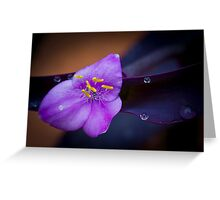 Violet & Yellow Flower Greeting Card