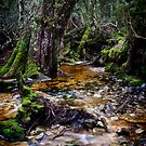 Cradle Mountain Stream by Karen Scrimes