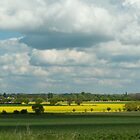 Rapeseed Fields in England by Melodee Scofield