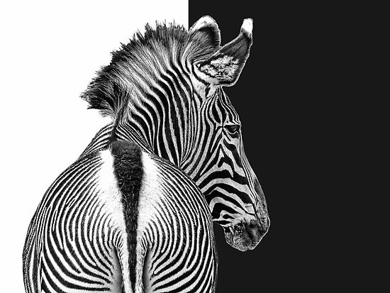 stripy by Jo-PinX