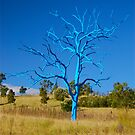 Blue Nesting Tree  by Penny Smith