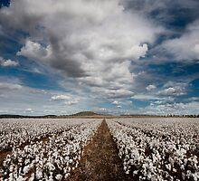 Cotton On - Toowoomba SE Qld Australia by Beth  Wode