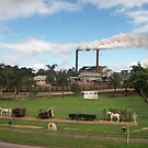 Sugar Cane Mill, Tully, QLD by Djinni62