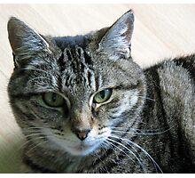 I've got my beady eye on you! Photographic Print