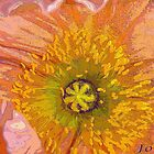 """Poppy"" by Gail Jones"