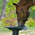 Bird bath break by Sue McGlothlin