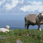 Ewe better not come any closer! by Rachelo
