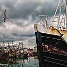 Portavogie Fishing Boats 01 by peter donnan