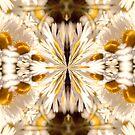 Divine Daisies by JEZ22