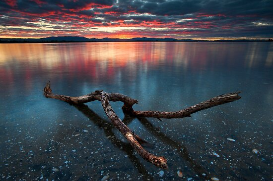 Kaimai Red Delight by Ken Wright