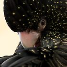 Black and Gold Speckled Parrot by Bevlea Ross