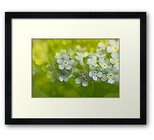 Forget me not... Framed Print