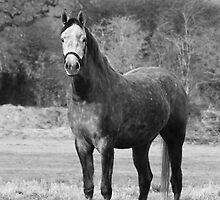 Dapple Gray by wraysburyade
