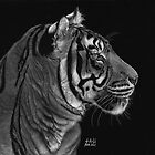 Siberian Tiger by Sheryl Unwin
