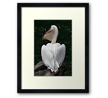 Great White Pelican Framed Print