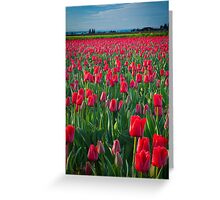 Mount Vernon Tulips Greeting Card