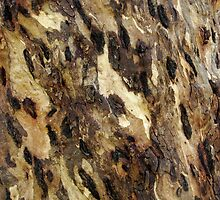 Peeled and Spotted Eucalyptus Tree by Michael Deeble