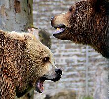Bear Battle by dgscotland