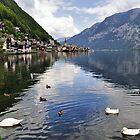 Swans in Hallstatt, Austria by avresa