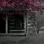 Carson Cabin by Forrest Tainio