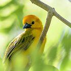 Small bird 2 by Mark Fendrick