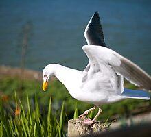 Sea Bird by randi83