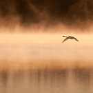 Morning flight by Mikko Lagerstedt