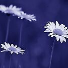 *Wild Daisies in Blue-ooh-ooh-ooh* by DeeZ (D L Honeycutt)