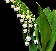 Brin de muguet by bubblehex08