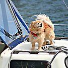Captain Canine by AngieBanta