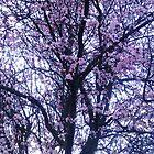 Blossom Spring by vampireegirll
