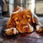 Mia the Wonderpuppy by ARPunk