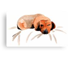 Sleepy Dog Canvas Print