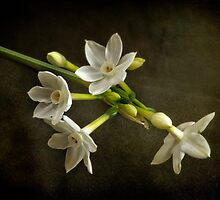 The very first Jonquil of the season by Clare Colins