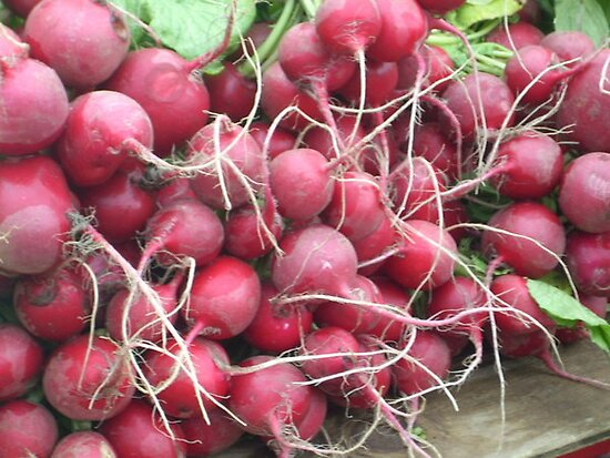 Reddish Radishes by ProfessorBees