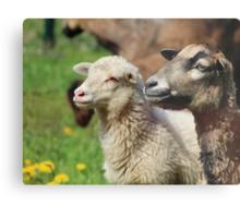 Spring Meadow & Sheep Metal Print