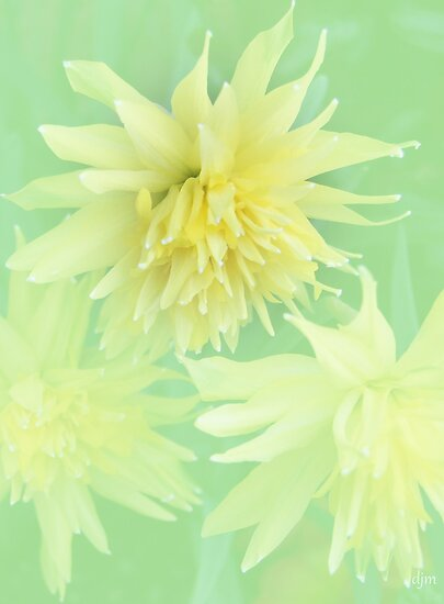 Double Daffodils by Diane Johnson-Mosley