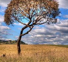Character #2 -  Somewhere Near Oberon, NSW - THe HDR Experience by Philip Johnson
