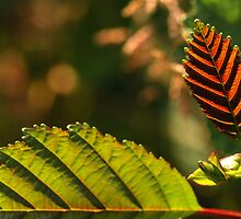 Leaf Ridges by Simon Pattinson
