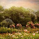 Rose Garden by Jessica Jenney