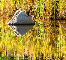 Creekside Reflections by BGSPhoto
